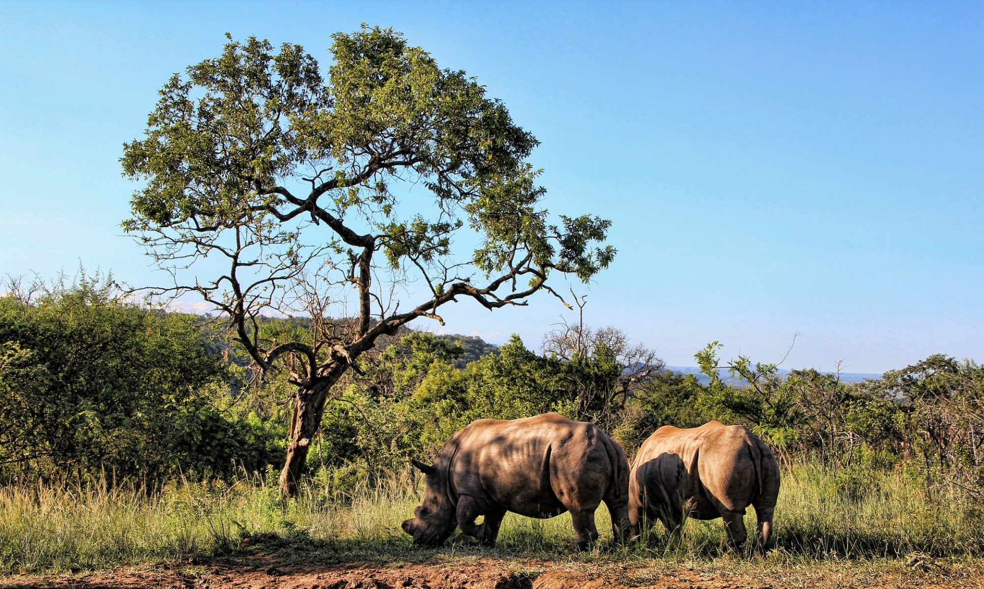Rhino Filtration